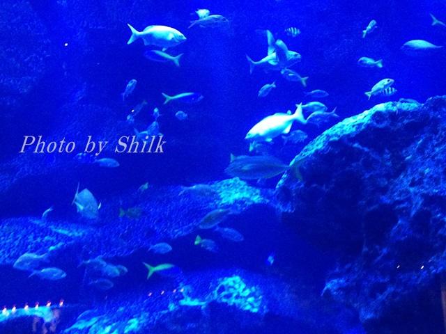 すみだ水族館の東京大水槽