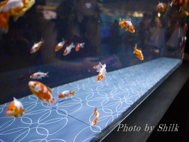すみだ水族館「江戸リウム」