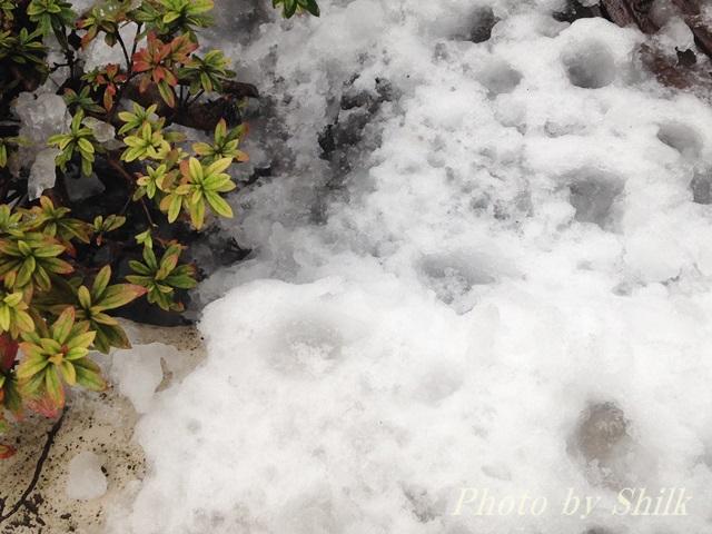 11月初雪
