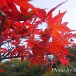 箱根の紅葉を見に行ってきました♪