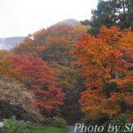 箱根の紅葉がまさに見頃で最高でした~♪