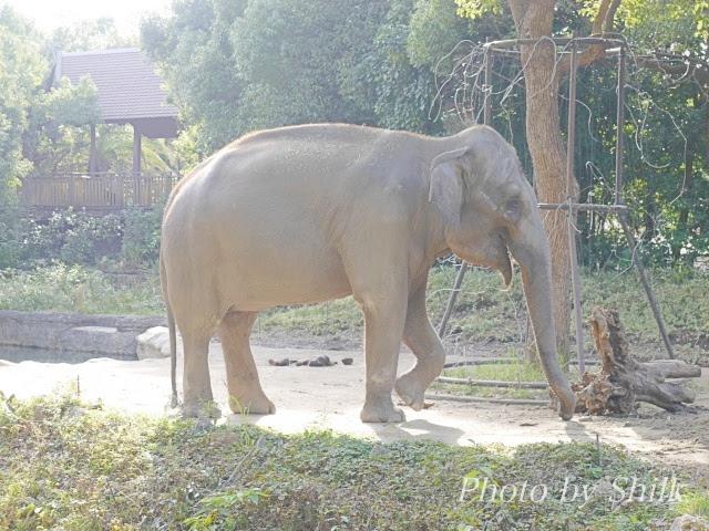 よこはま動物園ズーラシアのイメージ