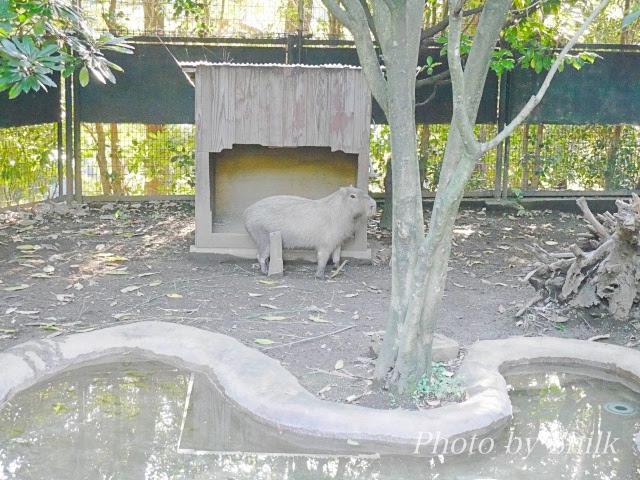 zoo101