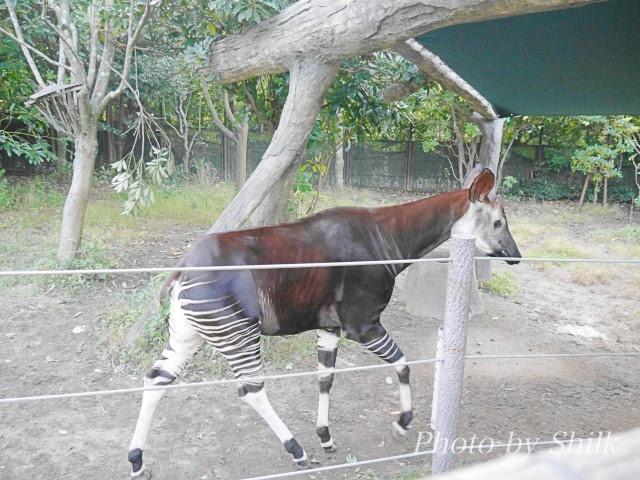 zoo113