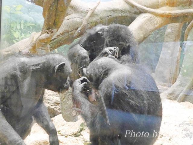 zoo115