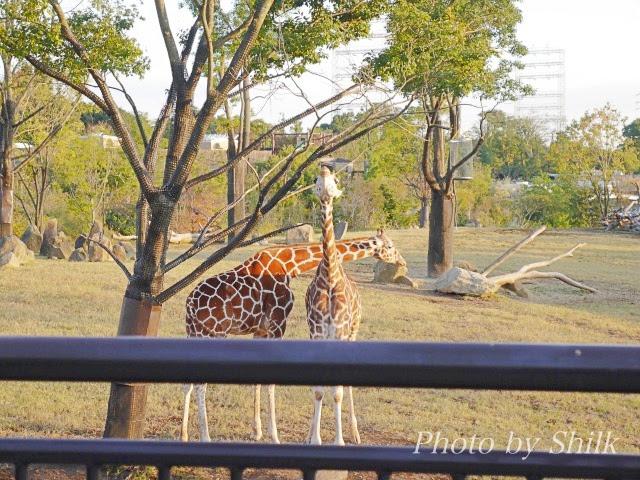 zoo126