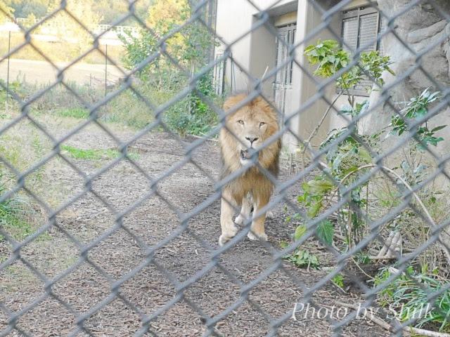 zoo130