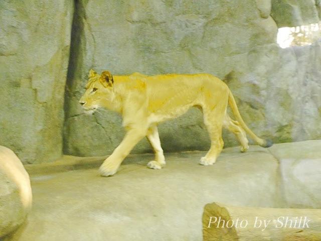 zoo136