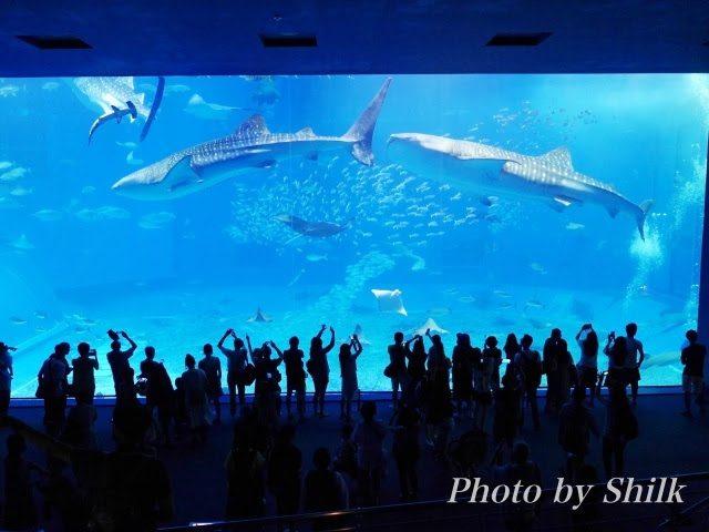 沖縄の美ら海水族館