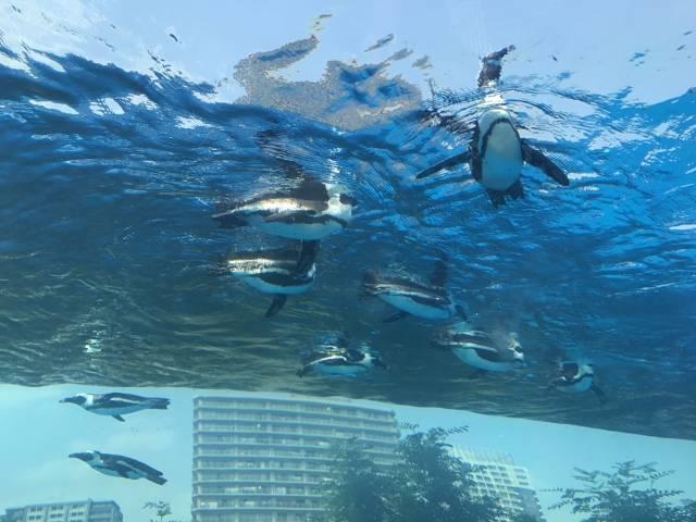サンシャイン水族館のイメージ