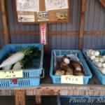茅ヶ崎市中島にある「清水農園」野菜直売所で採れたてタケノコ!