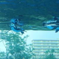 サンシャイン水族館の割引チケットや安く入れる方法をまとめてみました。