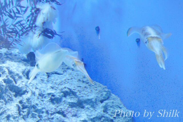 サンシャイン水族館:大海の旅