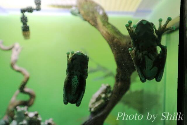 サンシャイン水族館:水辺の旅