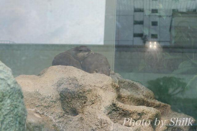 サンシャイン水族館:マリンガーデン 天空の旅
