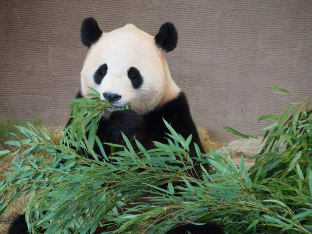 パンダのイメージ