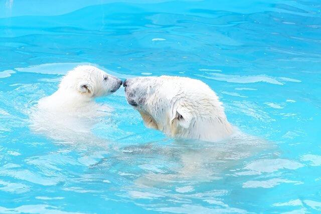 北海道円山動物園