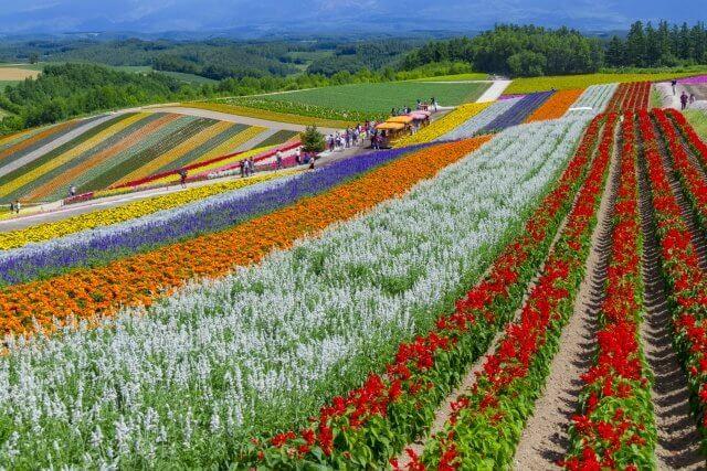 北海道四季彩の丘