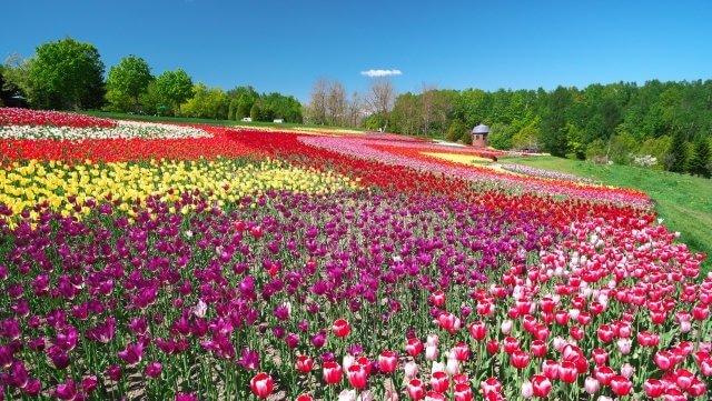 北海道国営滝野すずらん丘陵公園