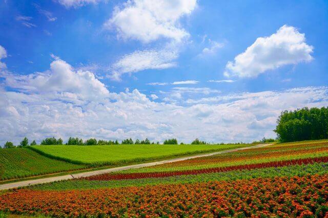北海道花畑
