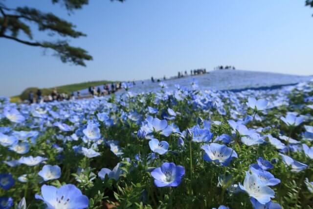 ひたち海浜公園のイメージ