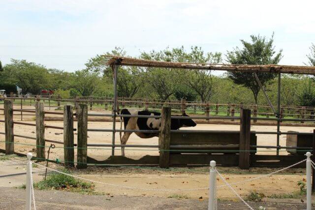 成田ゆめ牧場のイメージ