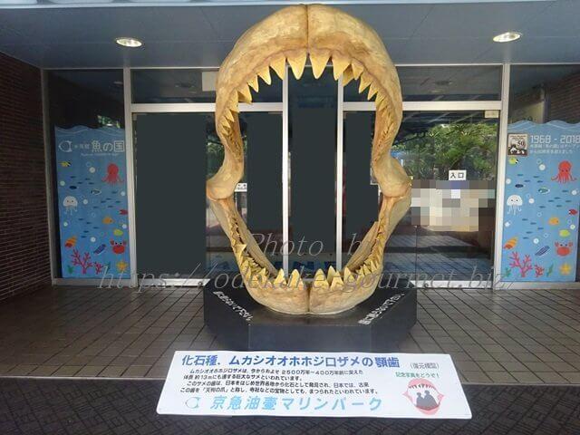 油壺マリンパークホホジロザメ顎歯