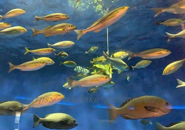 油壺マリンパーク魚の餌付け