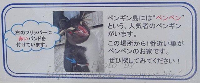 油壺マリンパークペンギンのペンペン