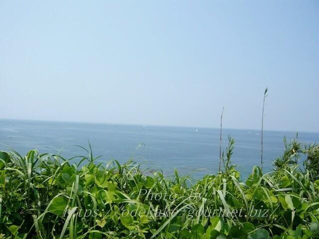 油壺マリンパーク無料休憩所からの海の眺め