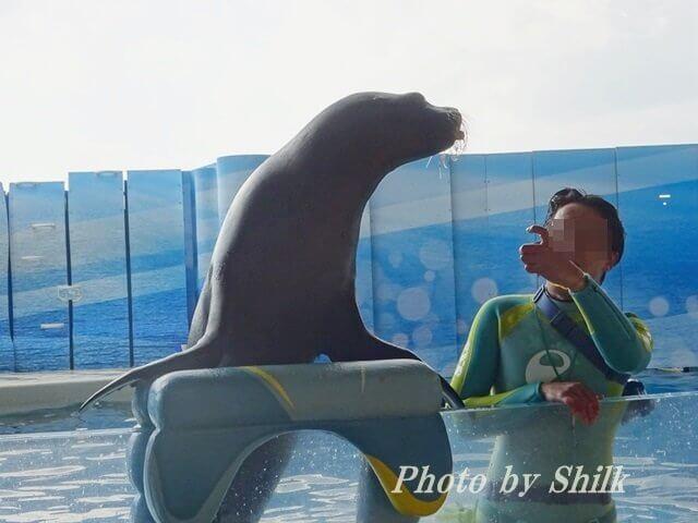 新江ノ島水族館・イルカとアシカのショー