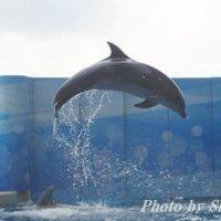 子供と新江ノ島水族館を楽しもう!1歳と3歳児を連れてのレポート