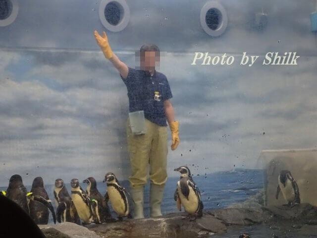 新江ノ島水族館・ペンギンのショー