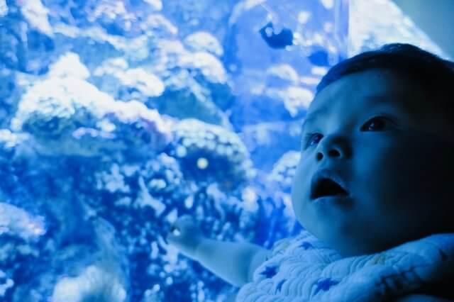 赤ちゃんと行く水族館